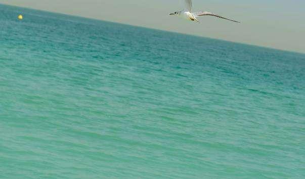 Безкоштовний пляж Джумейра опен