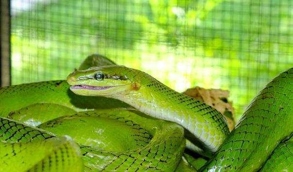 Зміїна ферма на Пхукеті