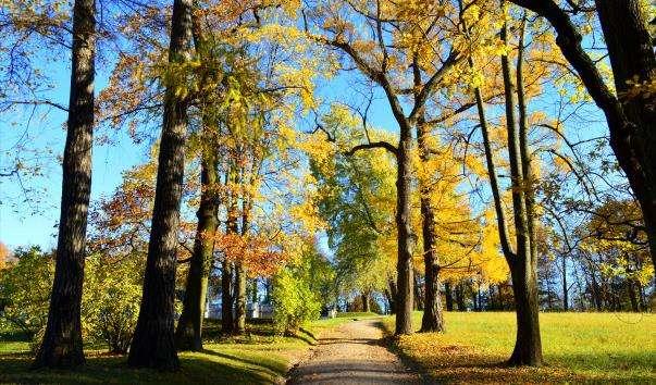 Катерининський парк