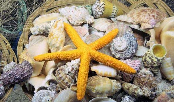 Океанаріум Анталії