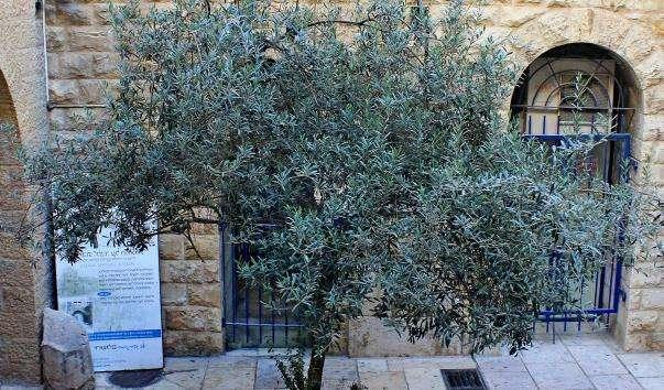 Єврейський квартал Єрусалиму