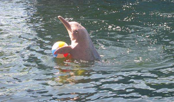 Дельфінарій Pattaya Dolphin World and Resort