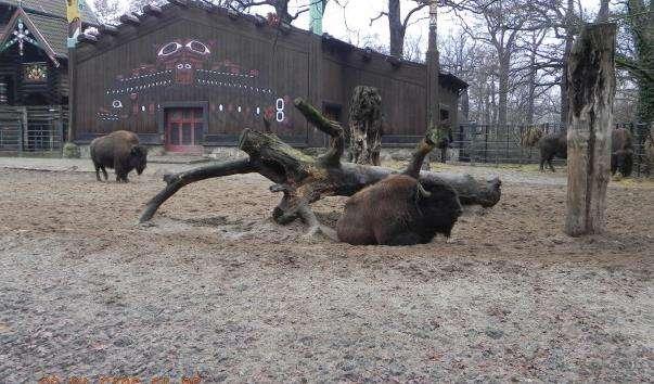 Берлінський зоопарк