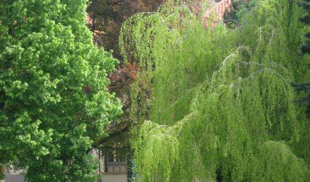 Палацові сади Празького Граду