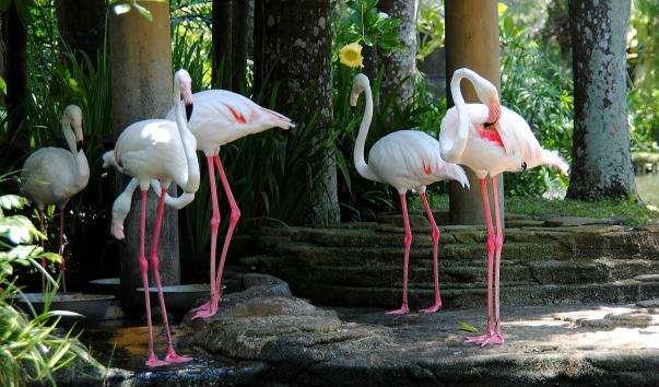Парк птахів