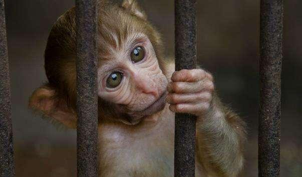 Сухумський інститут мавп