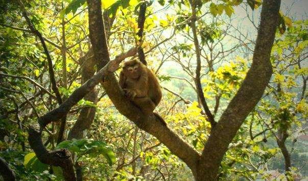 Національний парк Као Лак Лам Ру