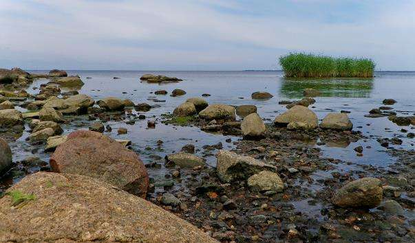 Фінська затока