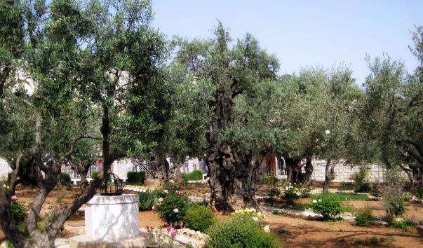 Гетсиманський сад