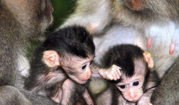Ліс мавп