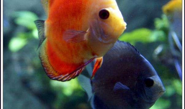 Океанаріум «Підводний світ Винперл»