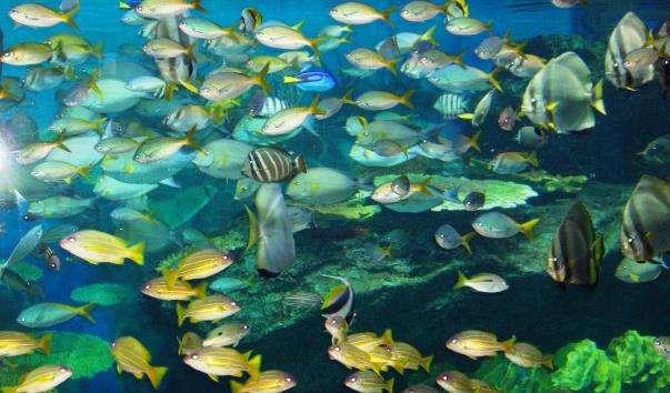 Океанаріум Siam Ocean World