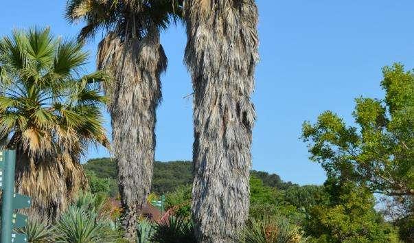 Ботанічний сад Монжуїк