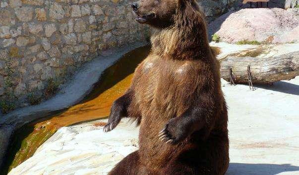 Московський зоопарк