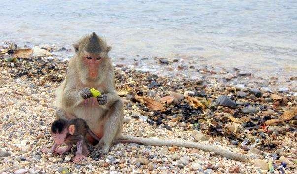 Мавпячий острів Ко Пет