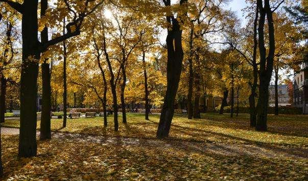 Михайлівський сад