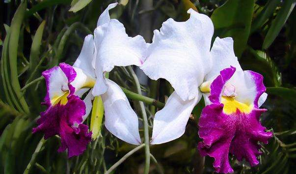 Сад орхідей