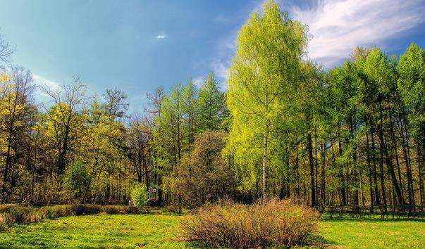 Парк Сокільники