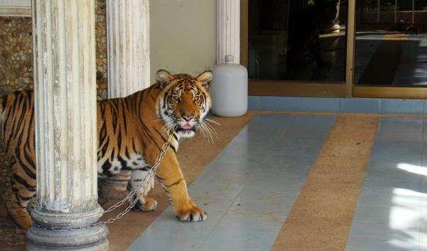 Зоопарк на Пхукеті