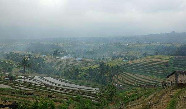 Рисові тераси